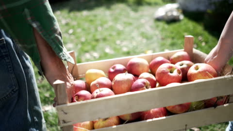 stockvideo's en b-roll-footage met land van vers fruit - autumn