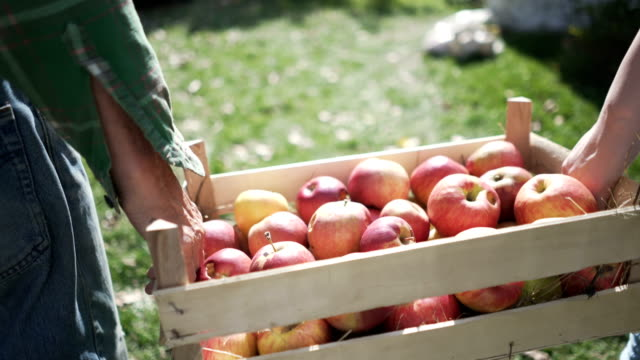 fresh country fruit - farmer stock videos & royalty-free footage