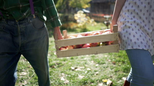 stockvideo's en b-roll-footage met land van vers fruit - boomgaard