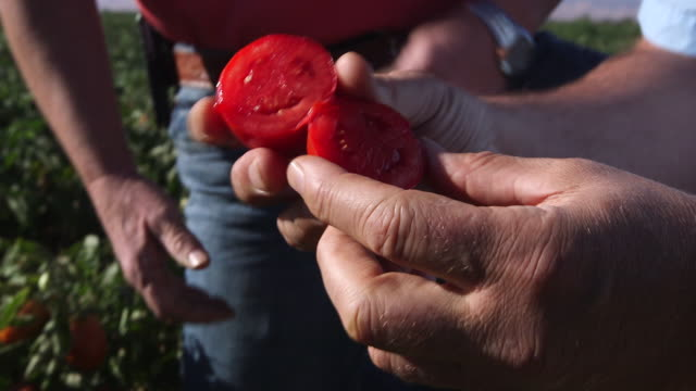 fresh cut tomato in field - wiese stock videos & royalty-free footage