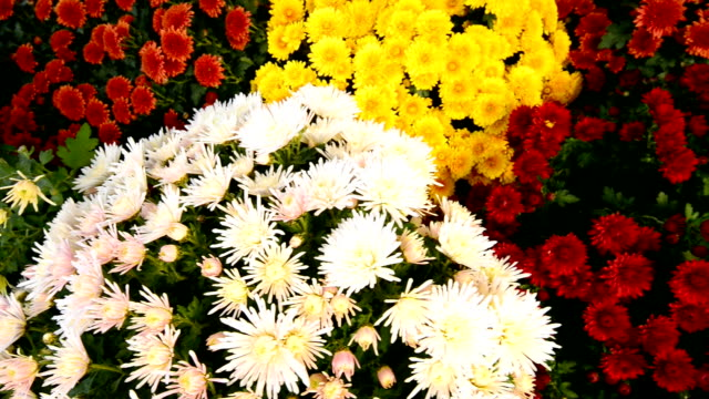 Fresh daisy and peony flowers in flower market