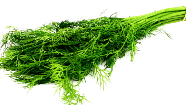 fresh dill - dill stock videos and b-roll footage