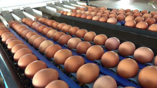 fresh eggs in a farm - brown stock videos & royalty-free footage