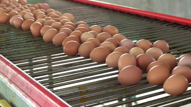 vídeos de stock e filmes b-roll de fresh eggs in a farm - ramo parte de uma planta