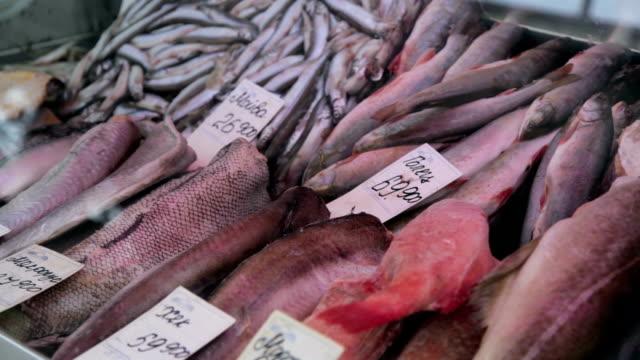 frischer fisch zum verkauf auf dem fischmarkt - präsentation hinter glas stock-videos und b-roll-filmmaterial