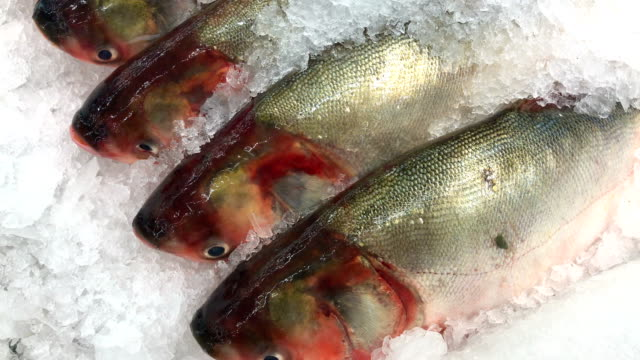 Fresh fish on ice in supermarket, 4K.