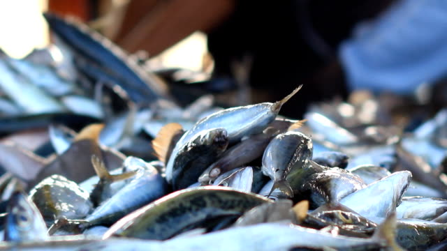 fresh fishes form andaman sea - fish market stock videos and b-roll footage