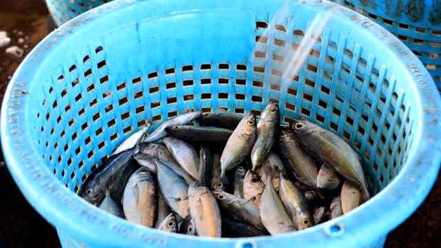 vídeos de stock e filmes b-roll de frescos peixes do mar de andaman - peixe fresco