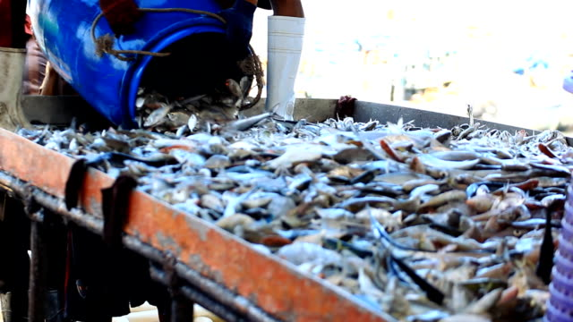 fresh fishes from andaman sea - fish market stock videos and b-roll footage