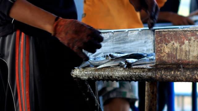 Färska fiskar från Andamansjön