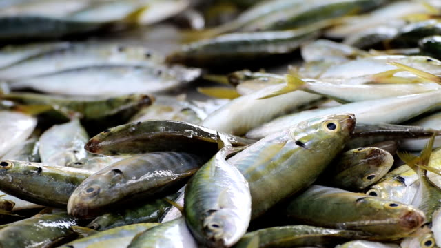 fresh fishes from the fish dock - fish market stock videos and b-roll footage