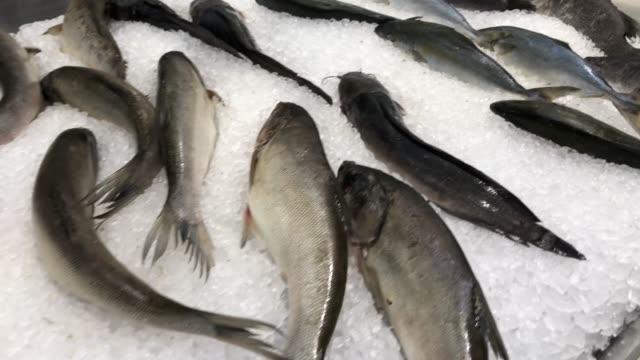 vidéos et rushes de poissons frais sur glace - simplicité