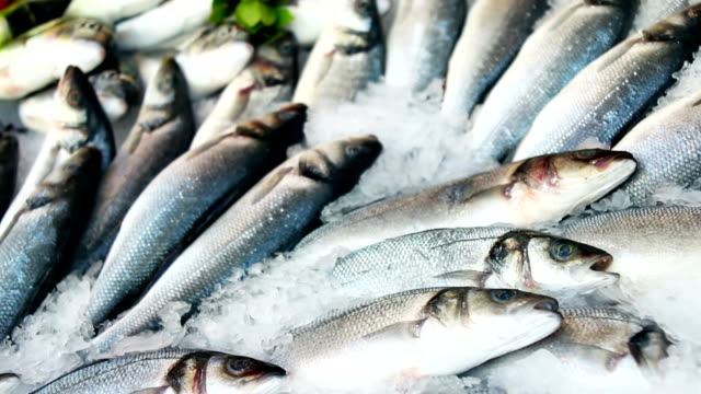 fresh fishes - fish market stock videos and b-roll footage