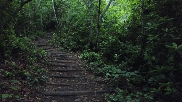 vídeos y material grabado en eventos de stock de mañana fresca de niebla en un bosque de pinos, los rayos del sol cayendo al suelo a través de las ramas de los árboles - acera