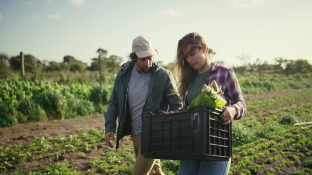 vídeos de stock e filmes b-roll de fresh food is the best food - sustainable resources