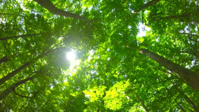 Fresh green beech forest