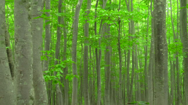 fresh green beech forest - plusphoto stock videos & royalty-free footage