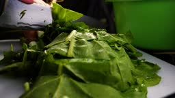fresh green chard roots green healthy and healthy food vegales and vegetables ready to cook in hot water