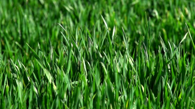 fresh green grass close-up - landscaped stock videos and b-roll footage