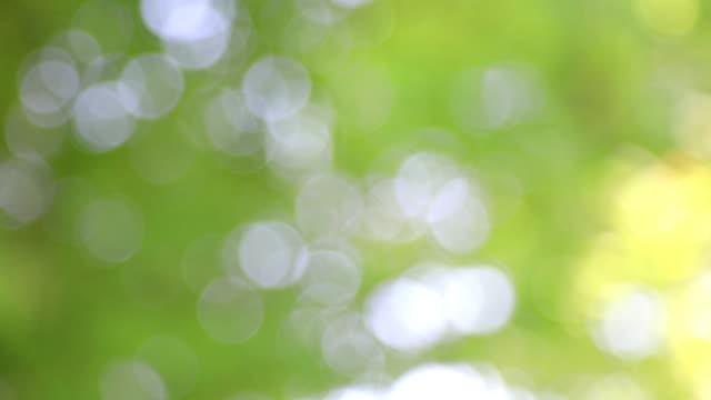 fresh green leaf blur - jp201806 stock videos and b-roll footage