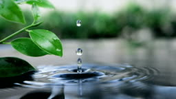 fresh green leaf with water drop over the water , nature leaf branch relaxation with water ripple drops concept , slow motion shot