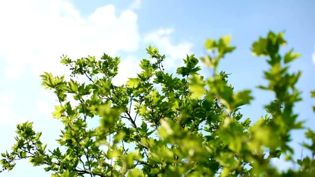 ふわふわ白い雲と青い空と新緑 - 枝点の映像素材/bロール