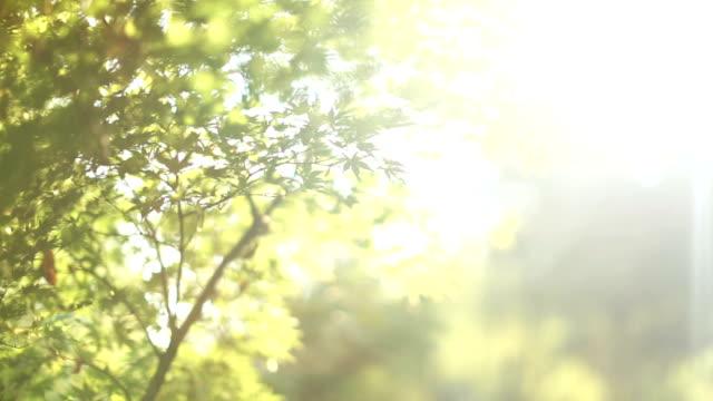 新鮮な緑の葉の晴れた日