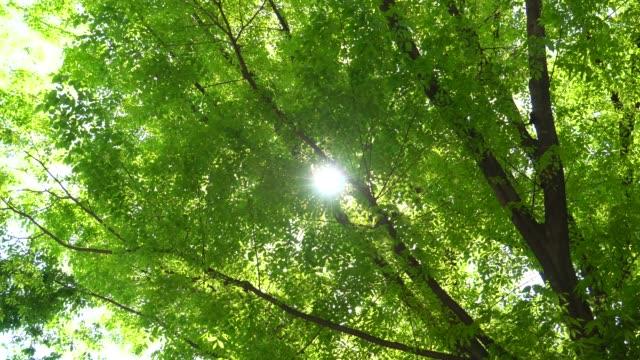 Fresh green leaves in springtime