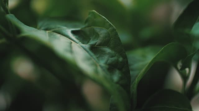 fresh green leaves - wood material stock videos & royalty-free footage