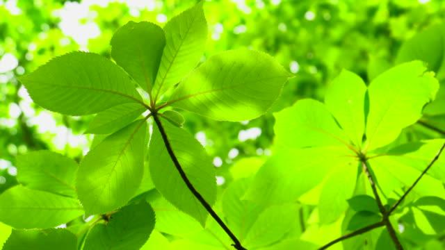 新緑の葉 - 生い茂る点の映像素材/bロール