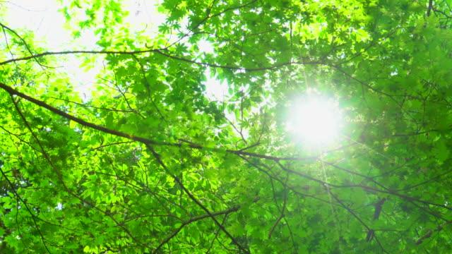 vidéos et rushes de feuilles vertes fraîches - en bois