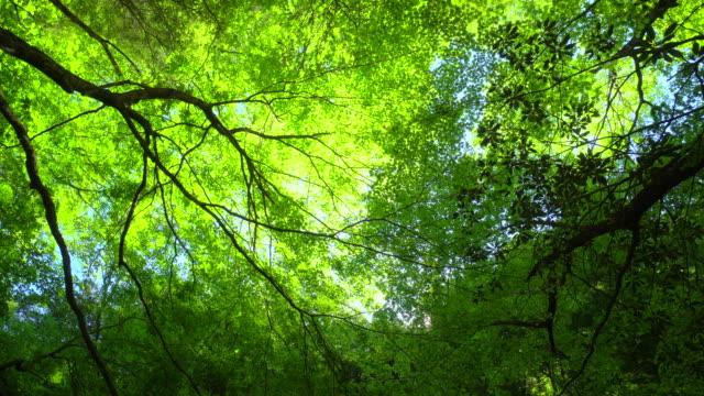 新鮮な緑の葉 - beauty in nature点の映像素材/bロール