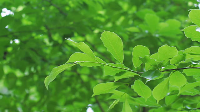 fresh green leaves - satoyama scenery stock videos & royalty-free footage