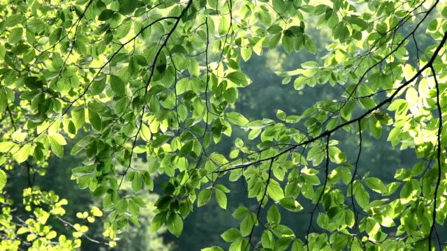 HD: Fresh Green Leaves