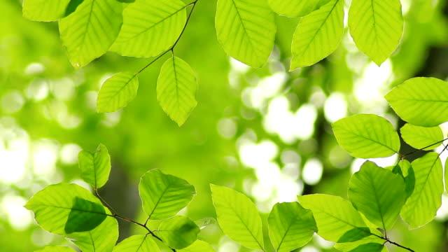 Novo verde folhas
