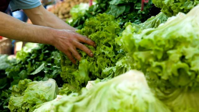 fresh green lettuce - mercato di prodotti agricoli video stock e b–roll