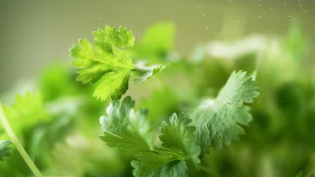 新鮮的綠色歐芹葉掉下來。美女拍攝。 - parsley 個影片檔及 b 捲影像