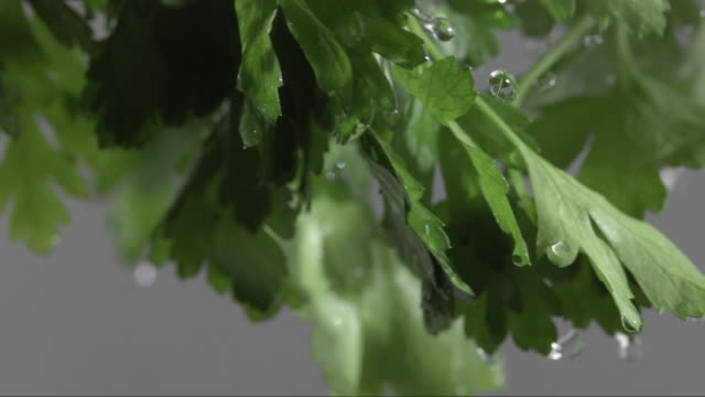 fresh, green parsley swirls through the air with water drops in front of a grey background - parsley stock videos and b-roll footage