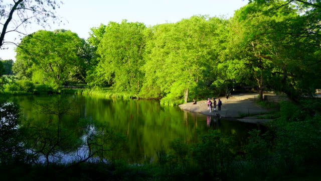Fresh green trees and people reflect to Turtle Pond water surface, and spring wind shakes leaves and trees at Central Park New York.