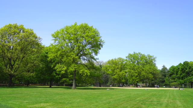 fresh green trees grow in spring at great lawn in central park new york. spring wind shakes fresh trees and leaves. - 芝生点の映像素材/bロール