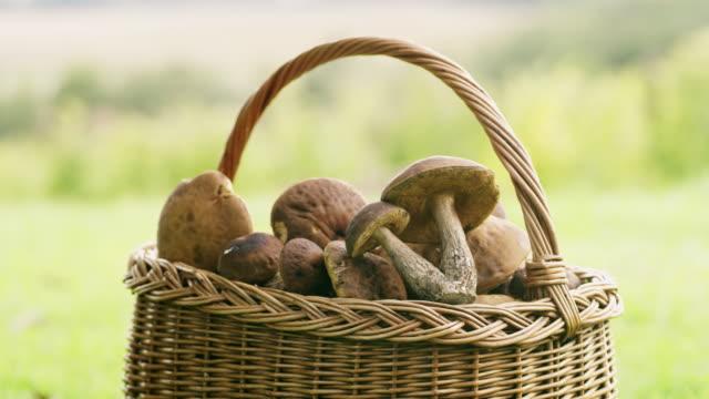 stockvideo's en b-roll-footage met ms fresh geoogste champignons in mand - paddenstoel