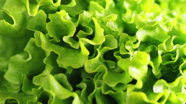 slo mo fresh lettuce falling on a table - salad stock videos & royalty-free footage