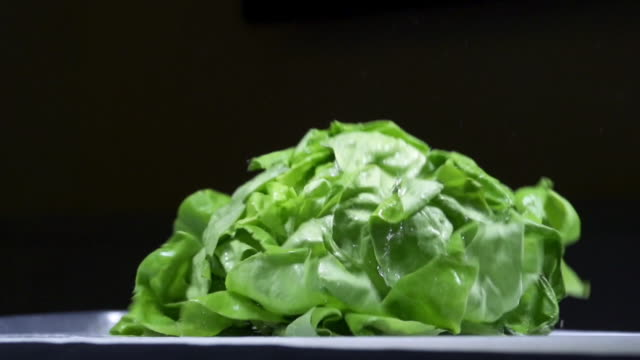 fresh lettuce - lettuce stock videos and b-roll footage