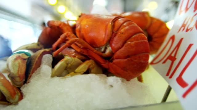 vídeos de stock, filmes e b-roll de fresh lobster pikes fish market downtown seattle usa - pike place market