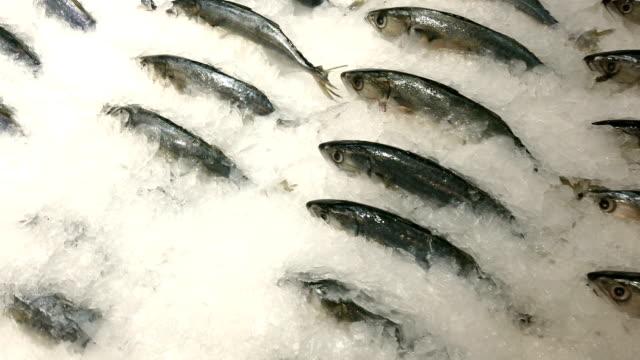 fresh mackerel fish on ice. small mackerel or pla too in thai language on shelf. - frozen stock videos & royalty-free footage