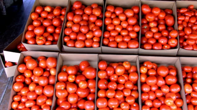 stockvideo's en b-roll-footage met fresh market tomato - karton