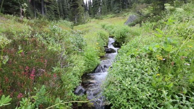 fresh mountain water stream - garibaldi park stock videos & royalty-free footage