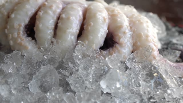 fresh octopus and fresh seafood - ghiacciato video stock e b–roll