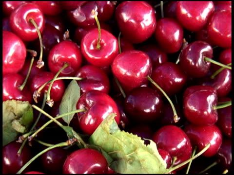 fresh organic cherries - letterbox format bildbanksvideor och videomaterial från bakom kulisserna