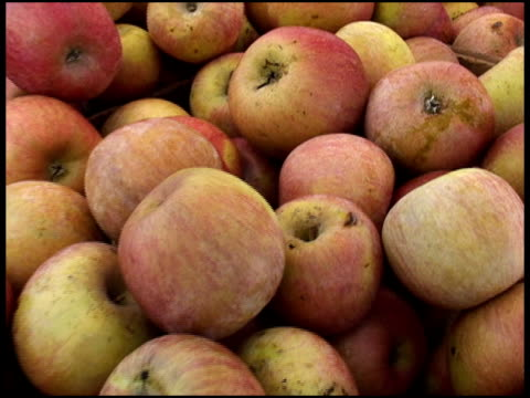 stockvideo's en b-roll-footage met fresh organic fuji apples - supersensorisch